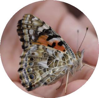 butterfly-757961